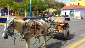 Horse cart delivering fresh raw milk to people in town.