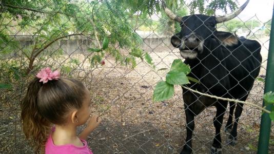Our pretend pet, Negra
